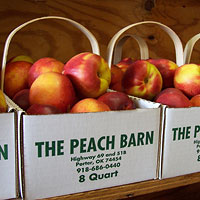 Beautiful Porter Peaches at The Peach Barn & Orchard in Porter, Oklahoma